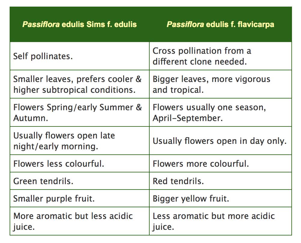 Passiflora edulis sims flavicarpa comparison