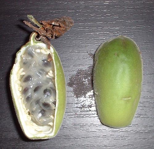 Passiflora trisecta fruit