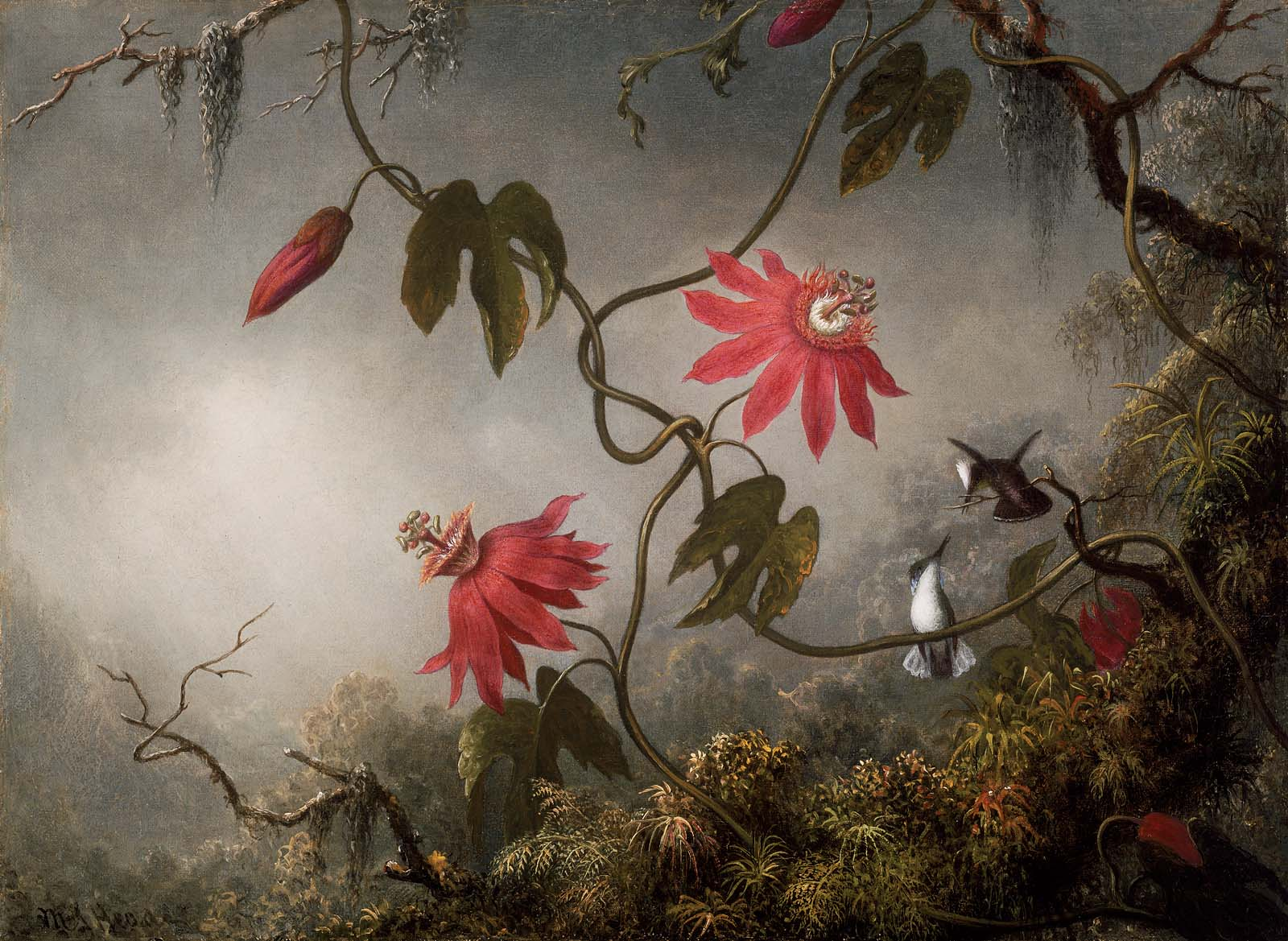 Passion flowers with Hummingbird | Martin Johnson Heade