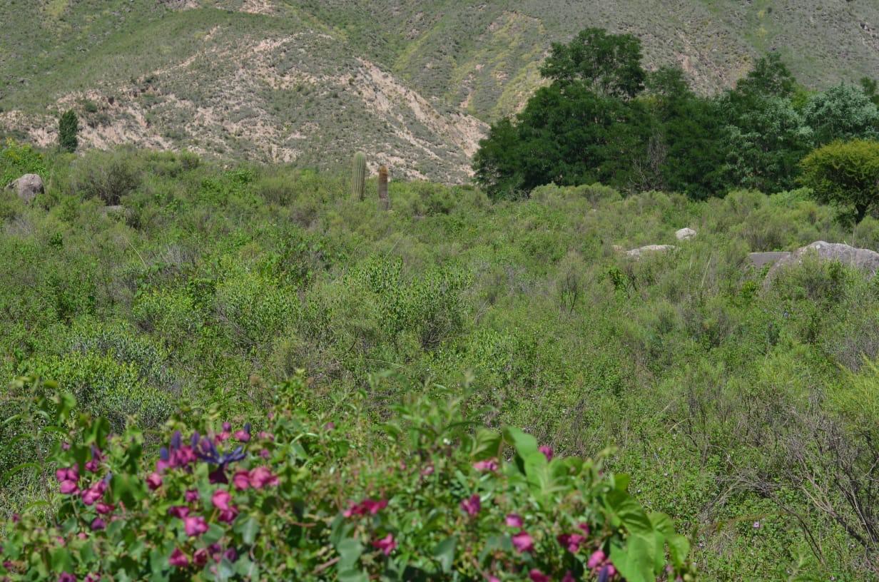 Passiflora umbilicata fruit mountain view