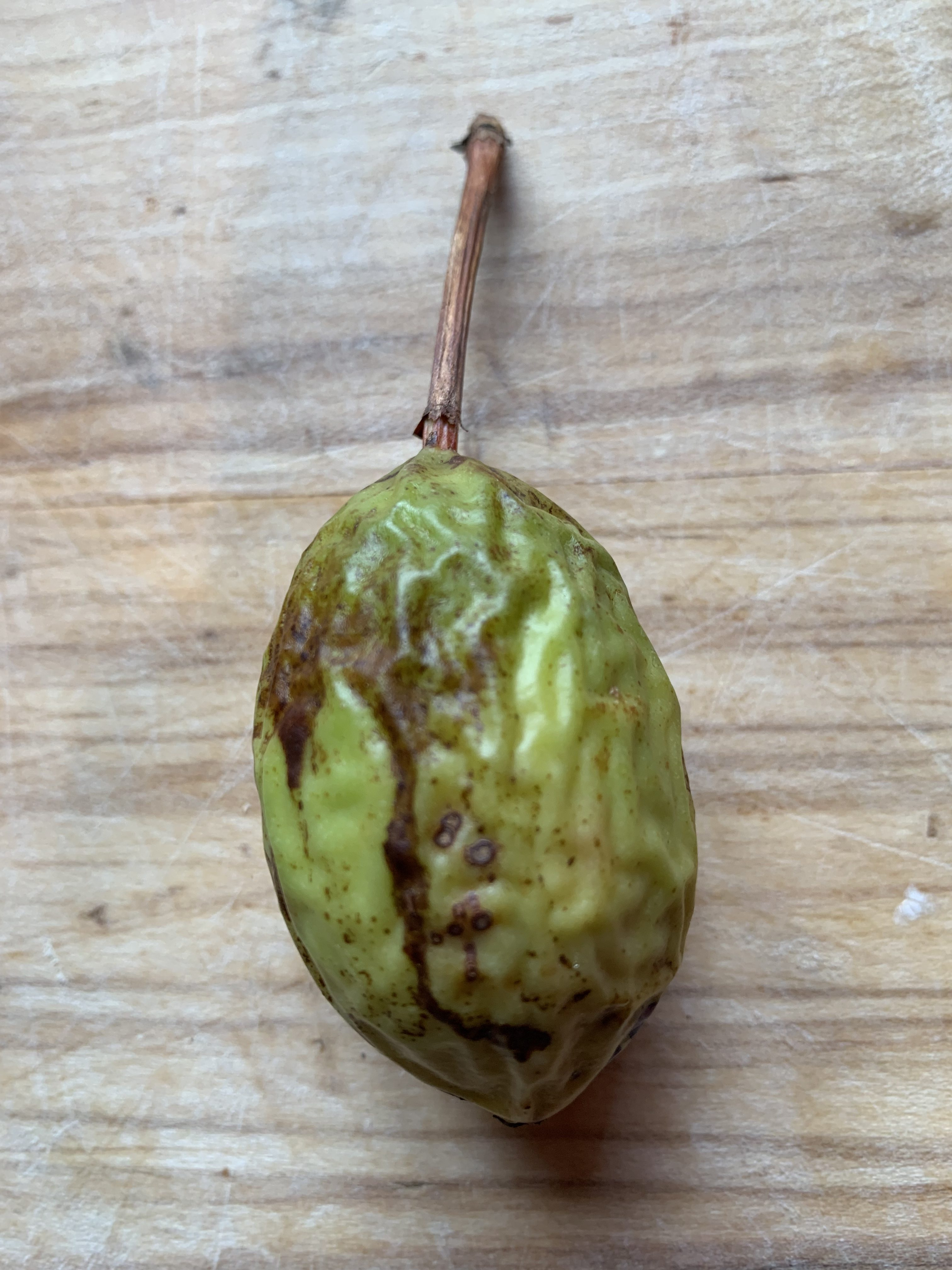 Passiflora manicata fruit