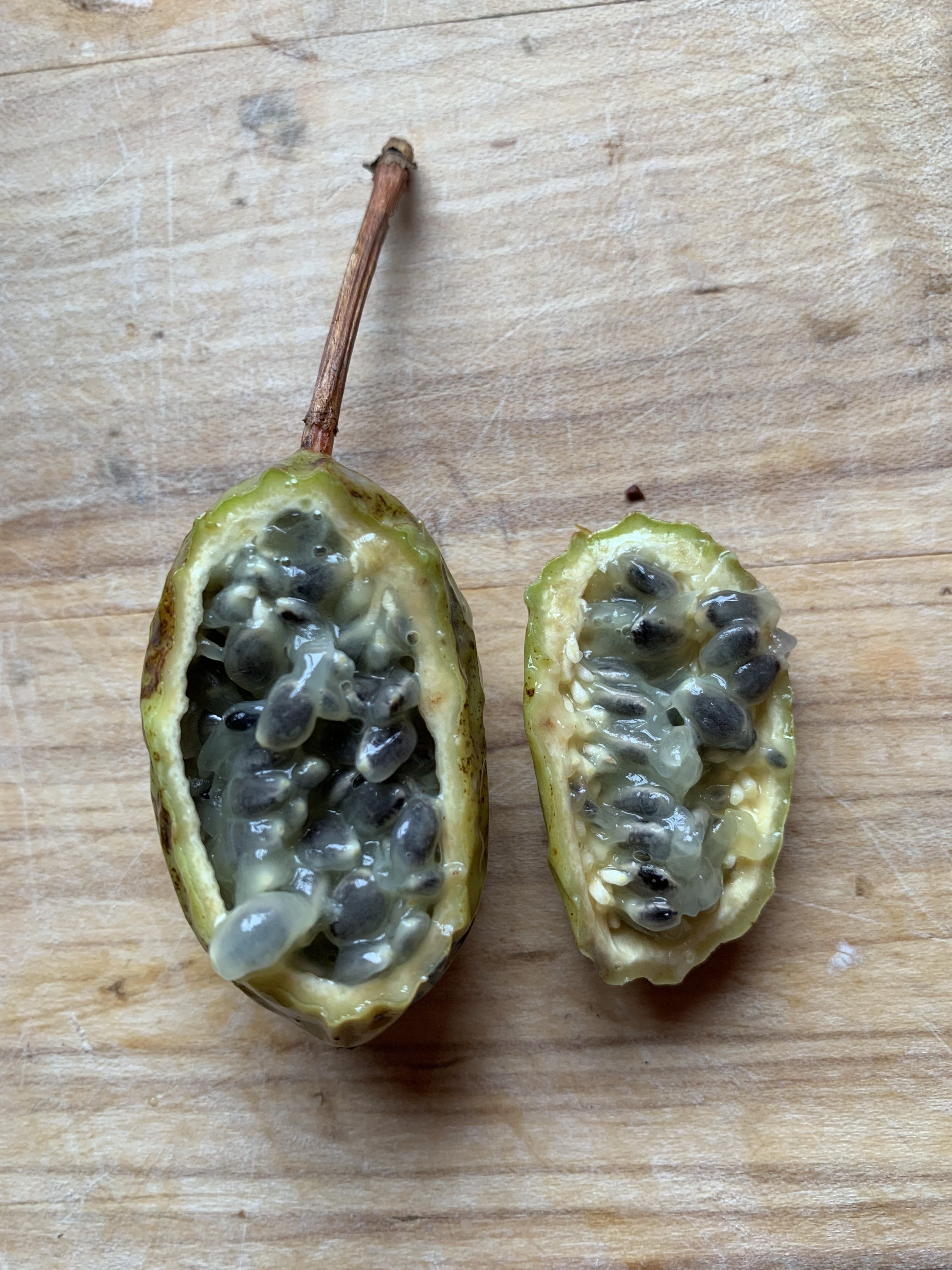 Passiflora manicata fruit and seed
