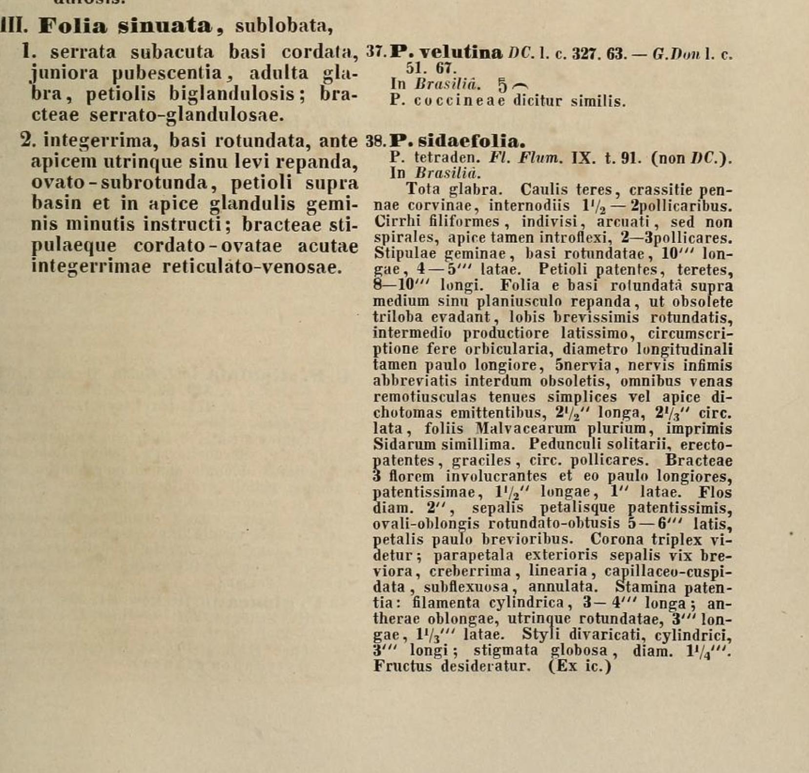 Passiflora sidifolia Roemer